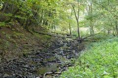 Earth colors of streamin the autumn Stock Photos