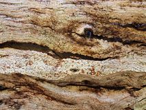 Earth Coloured Abstract Textured bark Pattern stock images