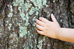 Earth Day. Child's hand on a tree. Extreme shallow DOF Stock Image