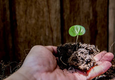 Earth Day and Arbor Day. Save earth for Arbor day Stock Photos