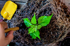 Earth day and Arbor day. Save Earth and world in Arbor day Stock Photography