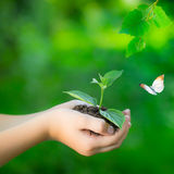 Earth day. Child holding young plant in hands against spring green background. Ecology concept. Earth day Stock Image