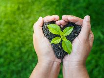 Earth day, save the earth, love concept. the woman hand holding stock photography