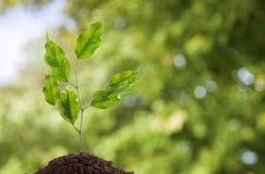 Earth day. Tree grow green spring conservation sprout Royalty Free Stock Image