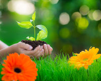 Earth day. Young plant in hands against beautiful green spring blurred background. Border from grass and flowers. Holiday Earth day concept Royalty Free Stock Photos