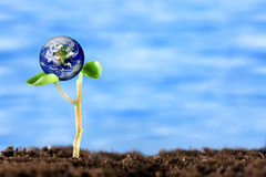 Earth Discovery. Planet Earth rests upon the leaves of a new sprouting plant Stock Photography