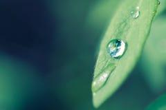 Earth in Drop Stock Photo