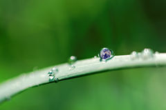 Earth drop Royalty Free Stock Photos