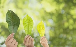 Free Earth Environment Day,  Hand Holding A Leaf And Environment  Icons Energy Sources For Renewable With Sustainability. Forest Royalty Free Stock Photography - 184031347