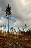 earth exploiting mother Στοκ εικόνα με δικαίωμα ελεύθερης χρήσης