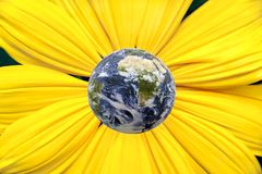 Earth Flower. Earth in the middle of a bright yellow gerbera daisy flower stock image