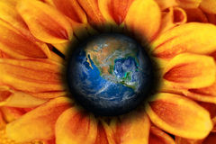 The earth on flower ,including elements furnished by NASA Stock Image
