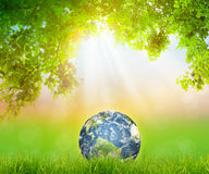Earth on Fresh spring green grass with green leaf stock photo