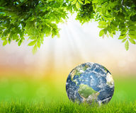 Earth on Fresh spring green grass with green leaf stock photos