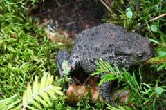 Earth Frog Stock Image