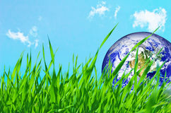 Earth globe in green grass Royalty Free Stock Photo