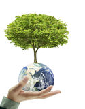 Earth globe and tree in his hand Royalty Free Stock Photography