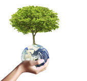 Earth globe and tree in his hand Stock Photography