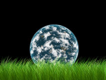 Earth in grass. The Earth in green grass Stock Image
