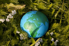Earth and green grass Royalty Free Stock Image