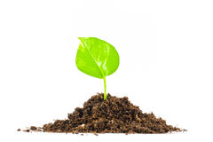 Earth growing Royalty Free Stock Image