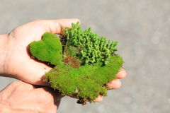 The earth in human hands. Male hands holding a piece of soil with young green vegetation in the form of heart isolated, Ecological concept Stock Photo