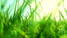 Fresh grass on a sunny green field at sunrise, nature background stock video footage