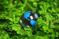 Earth marble in plant Royalty Free Stock Image