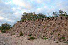 Earth mound with a lot of swallow nests stock image