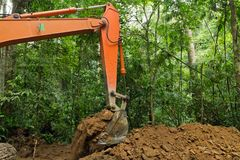 Earth Mover In Tropical Rainforest Stock Images
