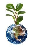 Earth planet with earth. 3d Earth planet with plant on white background stock images
