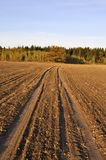 Earth road across the field in the evening Royalty Free Stock Photography