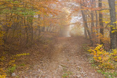 Earth road in Crimean forest Stock Image