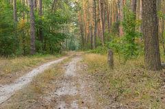 Earth road in evening mixed forest Royalty Free Stock Images