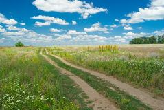 Earth road in flowering steppe Stock Images