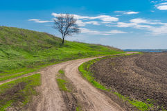 Earth road and lonely apricot tree at early spring season Royalty Free Stock Photo