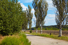 Earth road and poplar. Summer Royalty Free Stock Photos