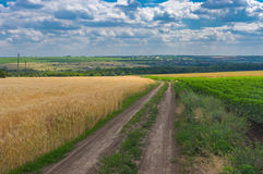 Earth road between ripe wheat fields leading to Novo-Aleksandrivka village near Dnipro city Royalty Free Stock Photo