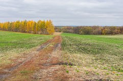 Earth road between winter crops fields Royalty Free Stock Image