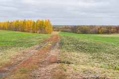 Earth road between winter crops fields Royalty Free Stock Photos