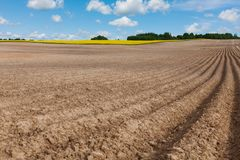 Arable field and blooming field at beautiful day. Earth rows with seeding seed and blue sky Stock Image