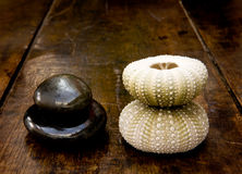 Earth and Sea Balance. Stones wood and sea life shells on old world background Stock Images