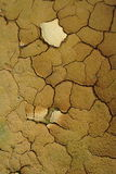 Earth texture. Cracked earth texture with plants stock images