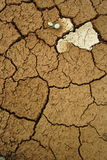 Earth texture. Cracked earth texture with plants royalty free stock photography