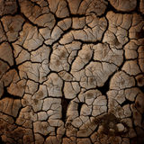 Earth texture. Cracked earth texture or background stock image