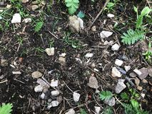 Dark earth texture with stones and grass royalty free stock photography