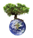 Earth tree. Isolated on white Stock Photos