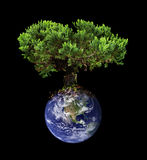 Earth tree Stock Photo