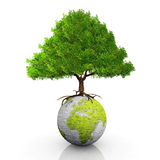 Earth and tree. Green Earth and green tree Stock Photos