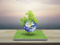 Earth with tree, Elements of this image furnished by NASA stock images